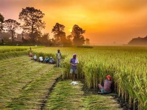 QUOTES ON FARMERS AND AGRICULTURE FOR ESSAY WRITING