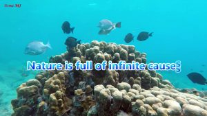 Earth Day 2021/ Save our Mother Earth/ Quotes on Nature/ Benzy, fmm
